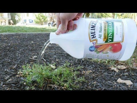 Put vinegar on your plants and this will happen